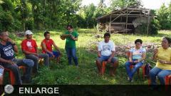 Farmers' Field School on Corn in Magsasaka Siyentista's Farm