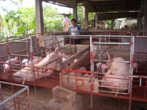 """Love For Agriculture: An Inspiring Story of Welito """"Titing"""" Mante 2"""