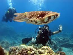 goede pasvorm gedetailleerde look lage prijs Apo Reef National Park   ATI in MiMaRoPa