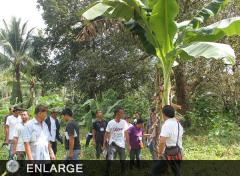 Participants observe and evaluate a banana plantation based on the guidelines of Good Agricultural Practices (GAP)