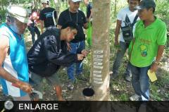 Participants are exposed to actual rubber tapping during the Training on Rubber Production and Management in Digos City,