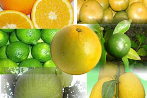 online course on citrus