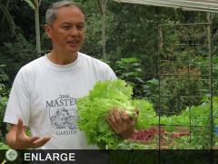 Pat Acosta, A Pioneer in Organic Farming in Benguet (photo by Ben Natividad)